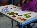 Welche Farben stecken in Laubblättern? (1)